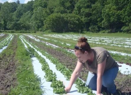traci harvesting