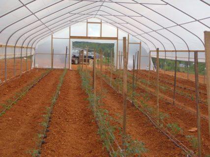 Thankful Fork Farm greenhouse