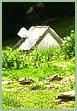 Alice Brooke Wilson: Maverick Farms photo