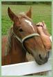 Sharon Deyton: Simple Pleasures Farm photo