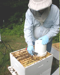Tim & Annie Burrell, Rabbit Creek Bee Company photo