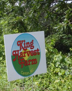 Steve and Terry King: King Harvest Farm photo