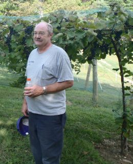 Robert Johnson: Hattie Hill Vineyard photo